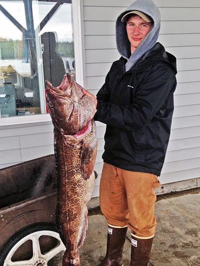 Josh's Lingcod Ketchikan Alaska