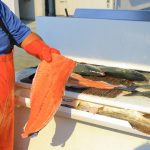 5 Types of Salmon Anglers Can Pursue in Ketchikan, Alaska