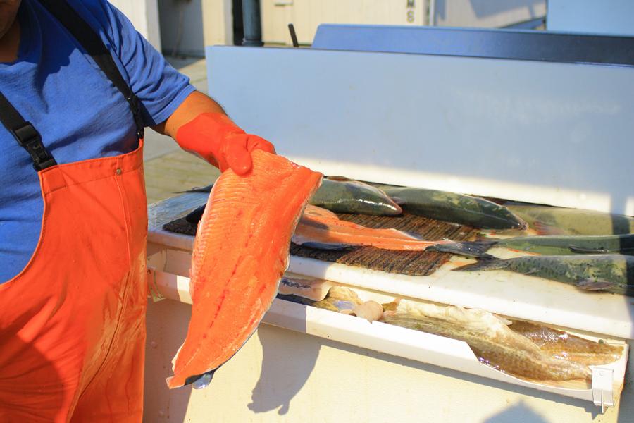 fresh-salmon-from-ketchikan-charter