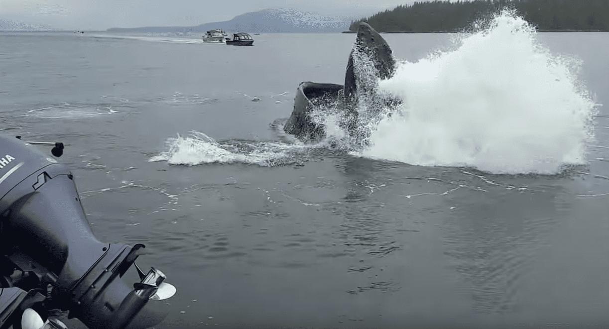 Whale Bubble Feeding in Ketchikan Alaska